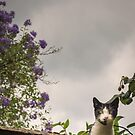 Meow by JEZ22