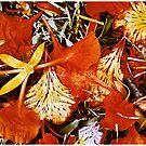 Fallen Petals by Mark Ross