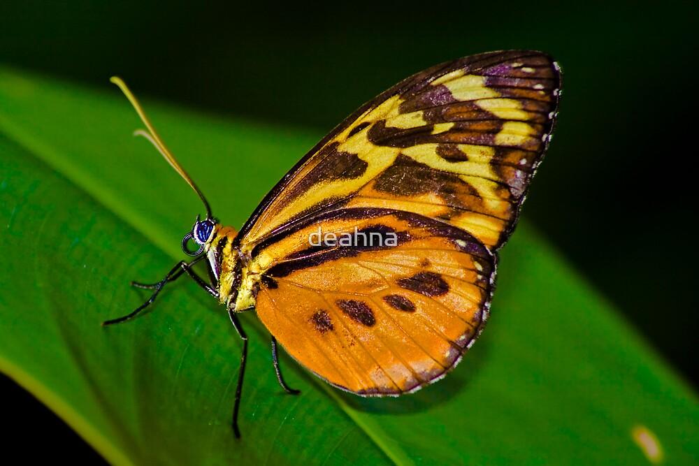Monarch Butterfly by deahna