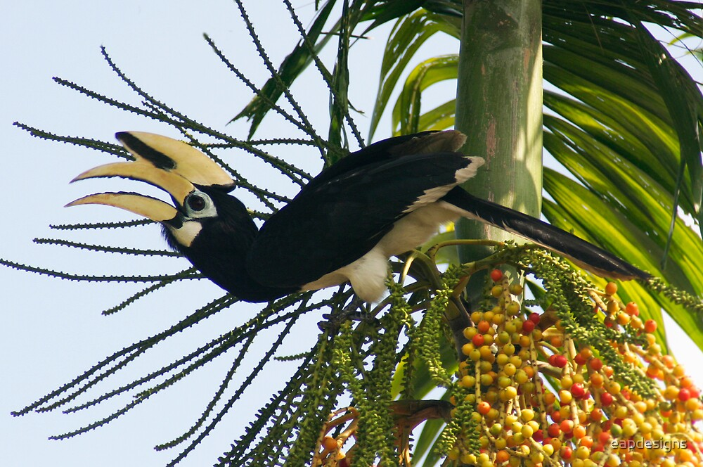 Hornbill's fruit by eapdesigns