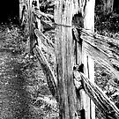 Old wooden fence by Elana Bailey