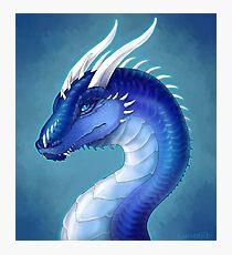 Blue Dragon- Saphira Photographic Print