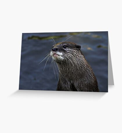 Whiskers Greeting Card