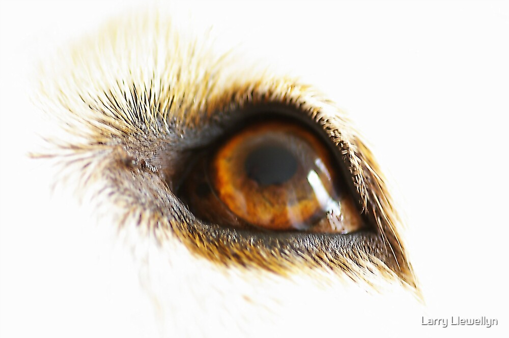 The Eyes Have It by Larry Llewellyn