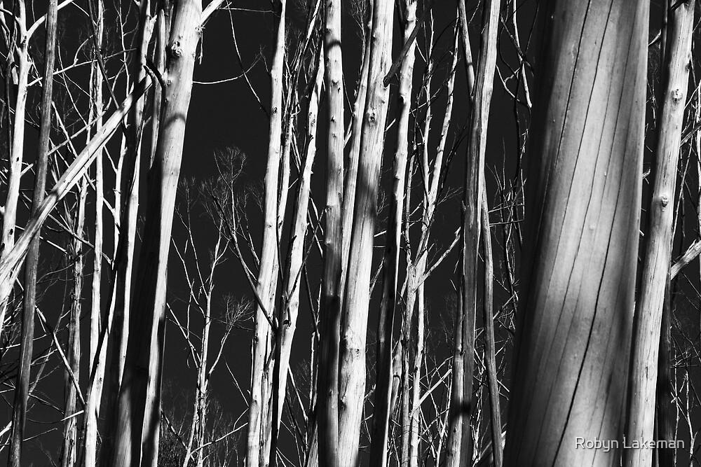 Dead trees by Robyn Lakeman