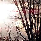 sunspots by rebecca smith