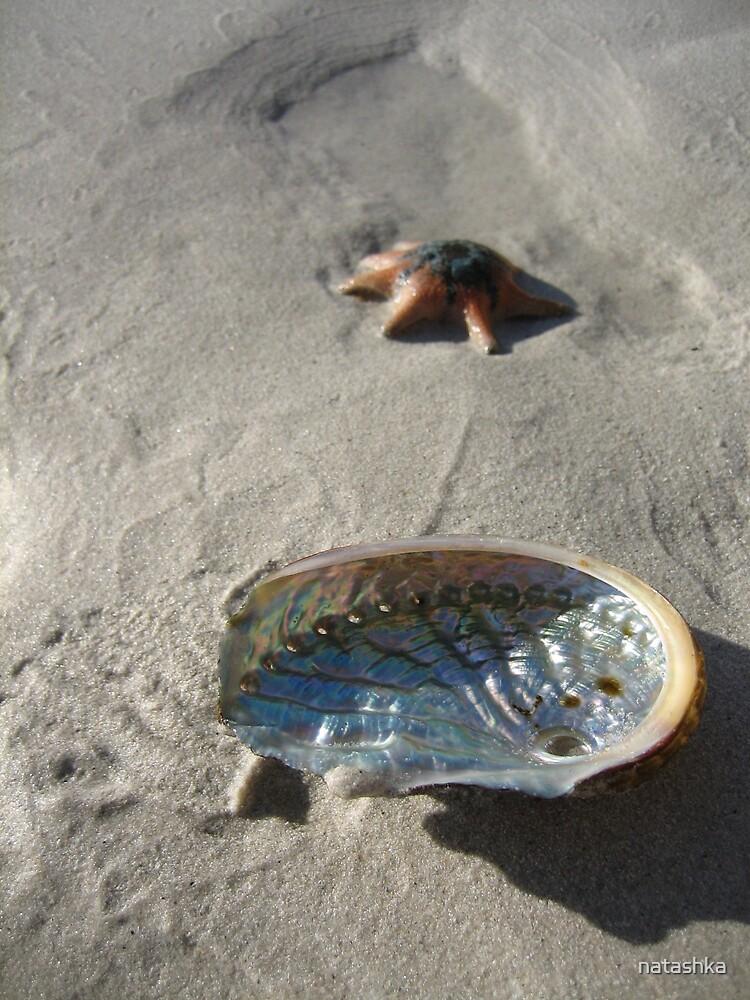 abalone shell and starfish by natashka