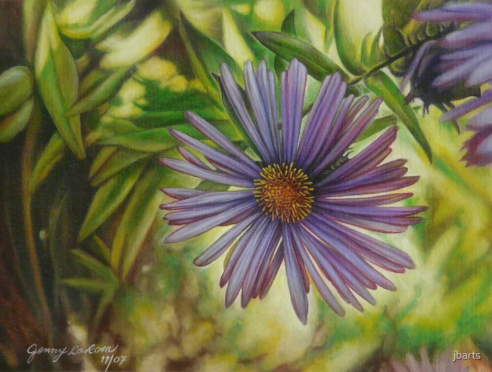 Purple Aster by jbarts