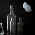Light, Bottles and White Poppy by Clare Colins