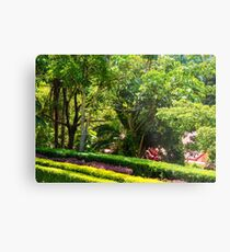 Lush Green Foliage Metal Print