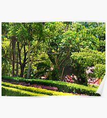 Lush Green Foliage Poster