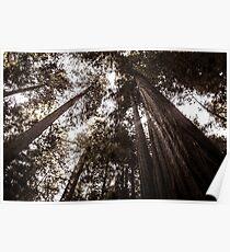 Redwood Giants Poster