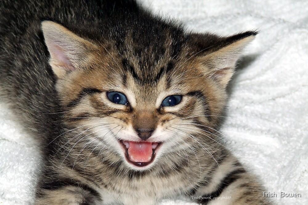 Screaming Kitty by Trish  Bowen