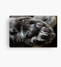PAWsitively Awful Canvas Print