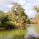 Cudgegong River NSW Australia by Doug Cliff