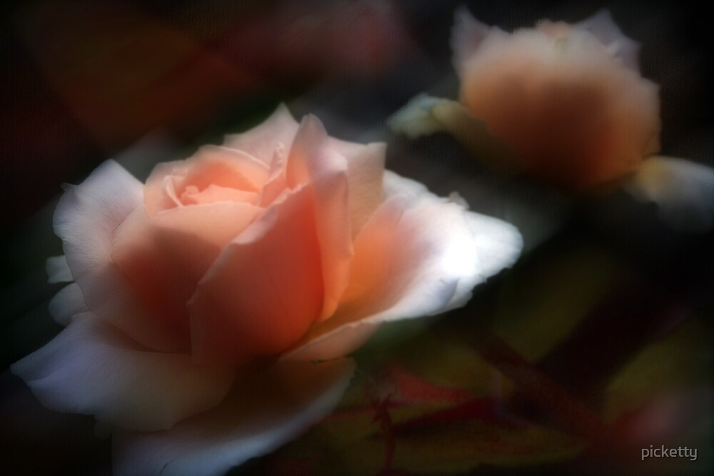 rose glow by picketty