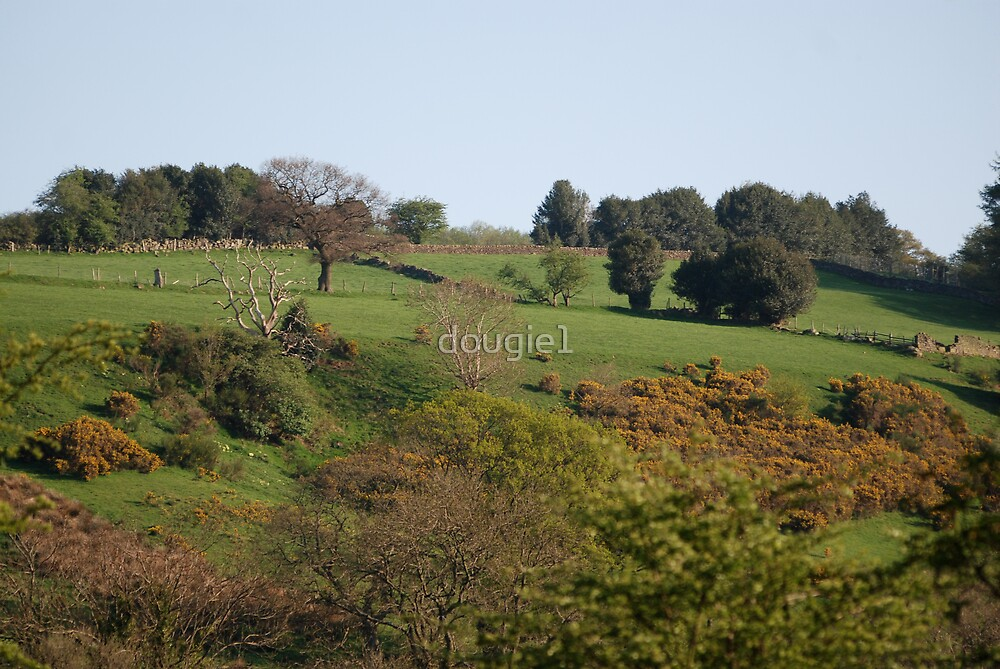 trees on a hill by dougie1