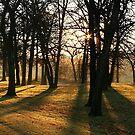 Sunlight thru the trees. by Stephen Thomas