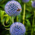 Bee & Echinops by vivsworld