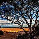 Lake Dundas by Peter Rattigan