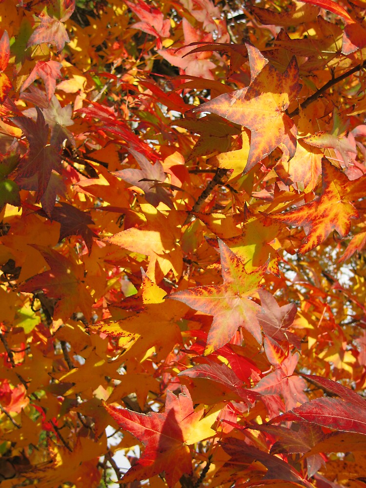 autumn leaves by rani
