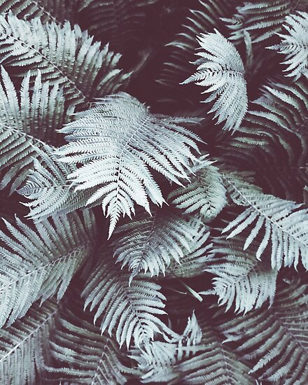 Fern,Tropical leaves, Green leaves, Leaf, Modern art, Wall art ...