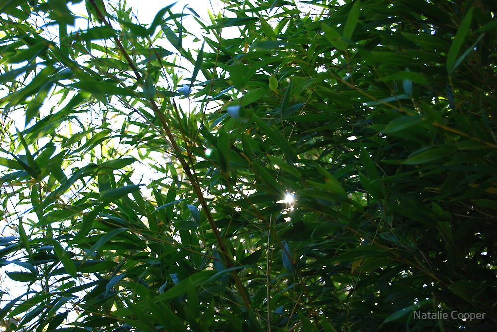 Bamboo Sun by Natalie Cooper