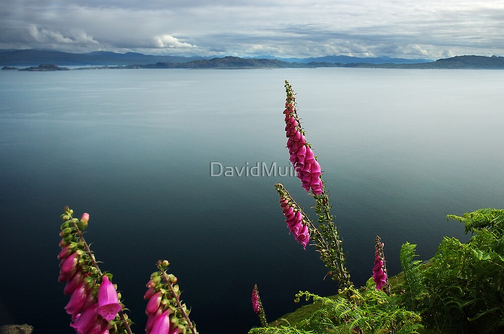 Foxglove and the Isle of Rassay by DavidMuir