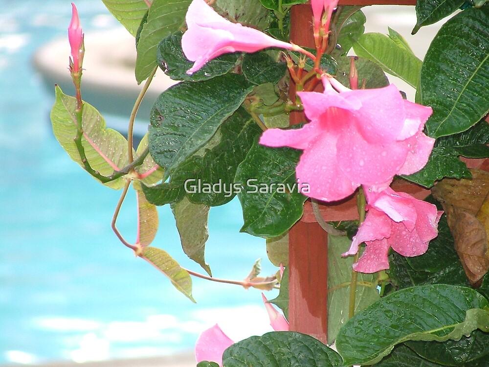pink2 by Gladys Saravia