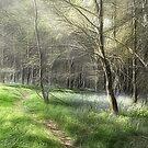 Woodland, Light and Shade by John Edwards