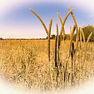 Grasses by JEZ22