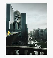 King Kong searching Banana in Town  Photographic Print