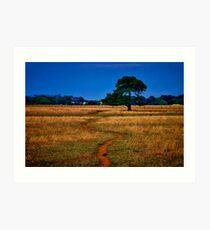 """The Sheep Track"" Art Print"