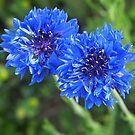 Blue Spring by budrfli