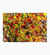 Abstract Autumn Photographic Print