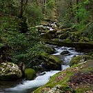 The Roaring Fork by Gary L   Suddath