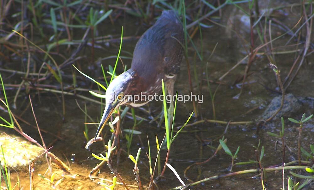 Cuban Heron (Cuba) by jdmphotography