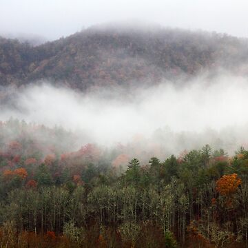 Morning In The Smokies by suddath