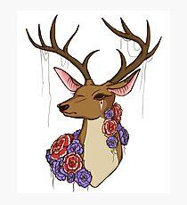 Patience My deer Photographic Print