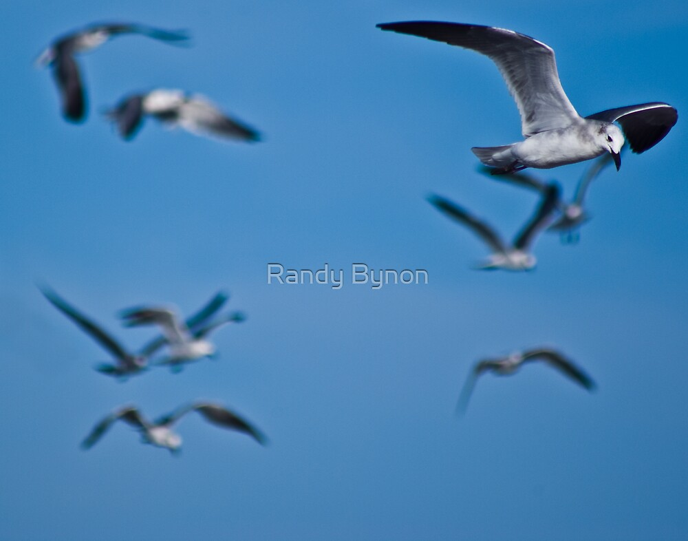 Birds of a Feather by Randy Bynon