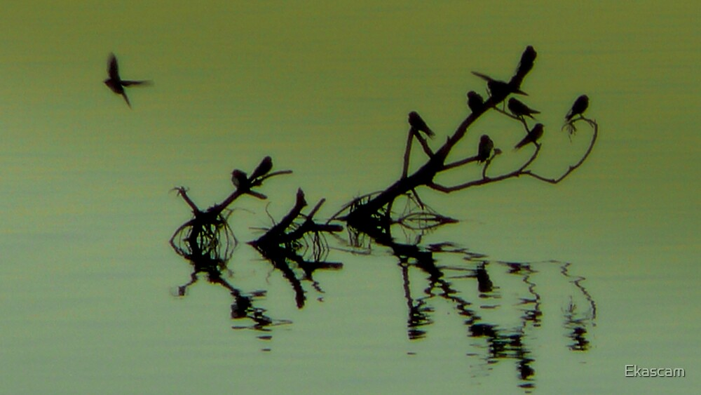 FUN ON THE WATER FOR BABY SWALLOWS by Ekascam