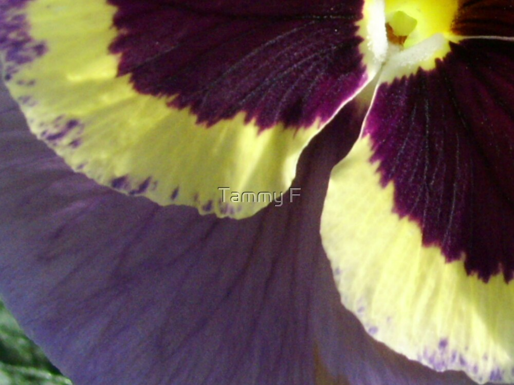 Pansy Petals by Tammy F