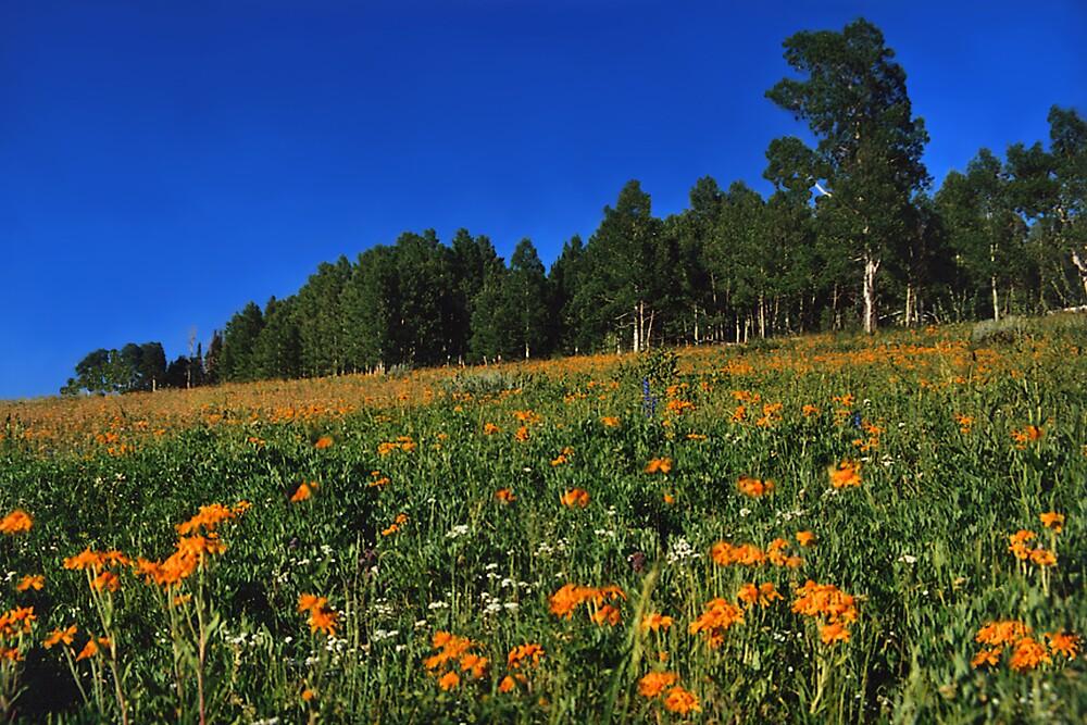 Painted Hillside by Ken Fortie