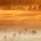 10.7.2017: Mist Over Marsh by Petri Volanen