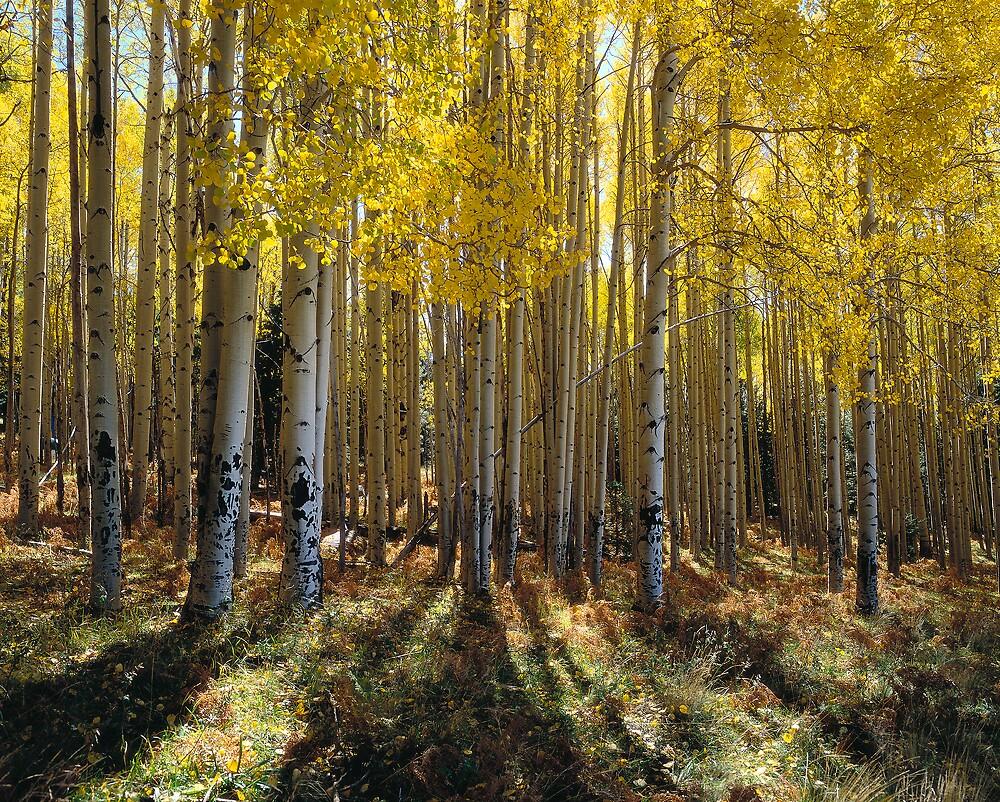 Golden Harts Prairie by Wilson Wyatt  Photography