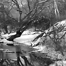 Wagner's Cove B&W by Sarah McKoy