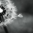 dandelion breeze by Clare Colins