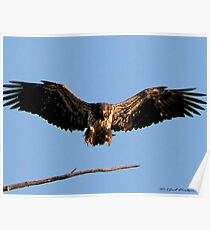 Spread Eagle Poster