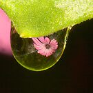 Water Drop Reflection by Richard  Windeyer