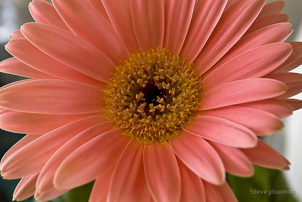 Subtle pink by Steve plowman